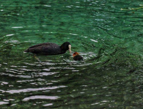 Che ne dite di una bella escursione sul fiume Tirino?